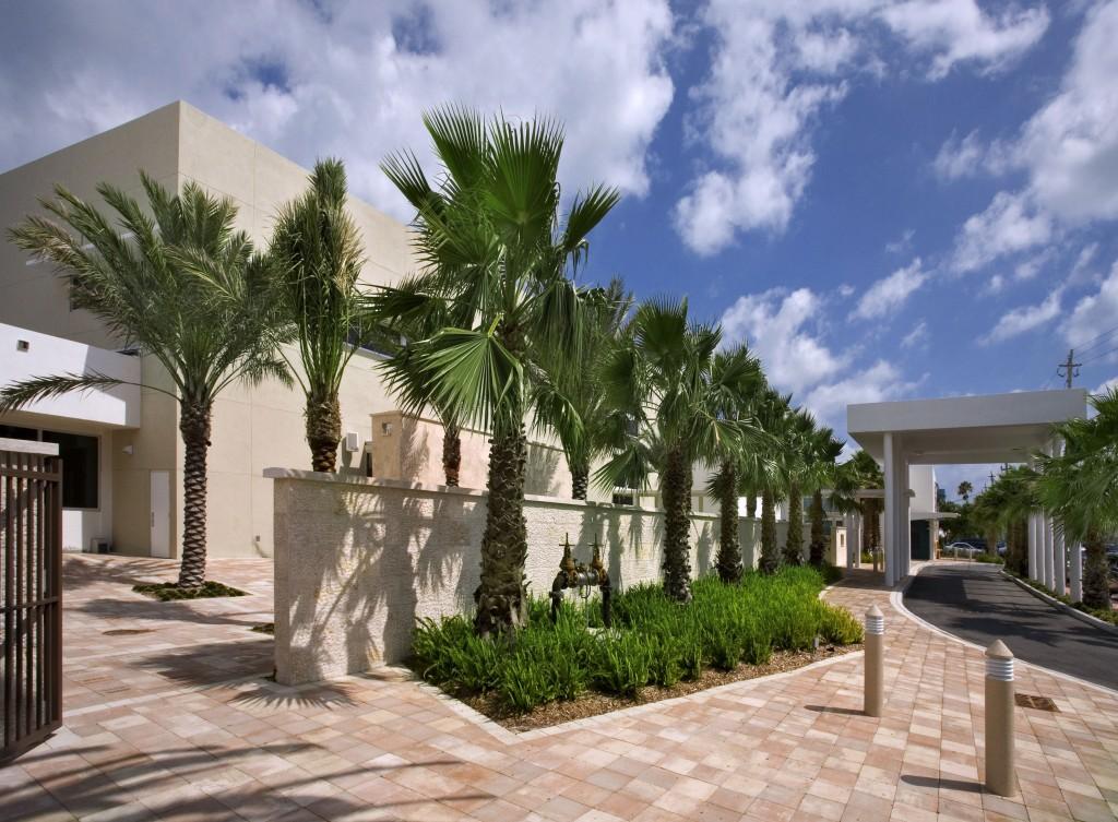 exterior palm trees line
